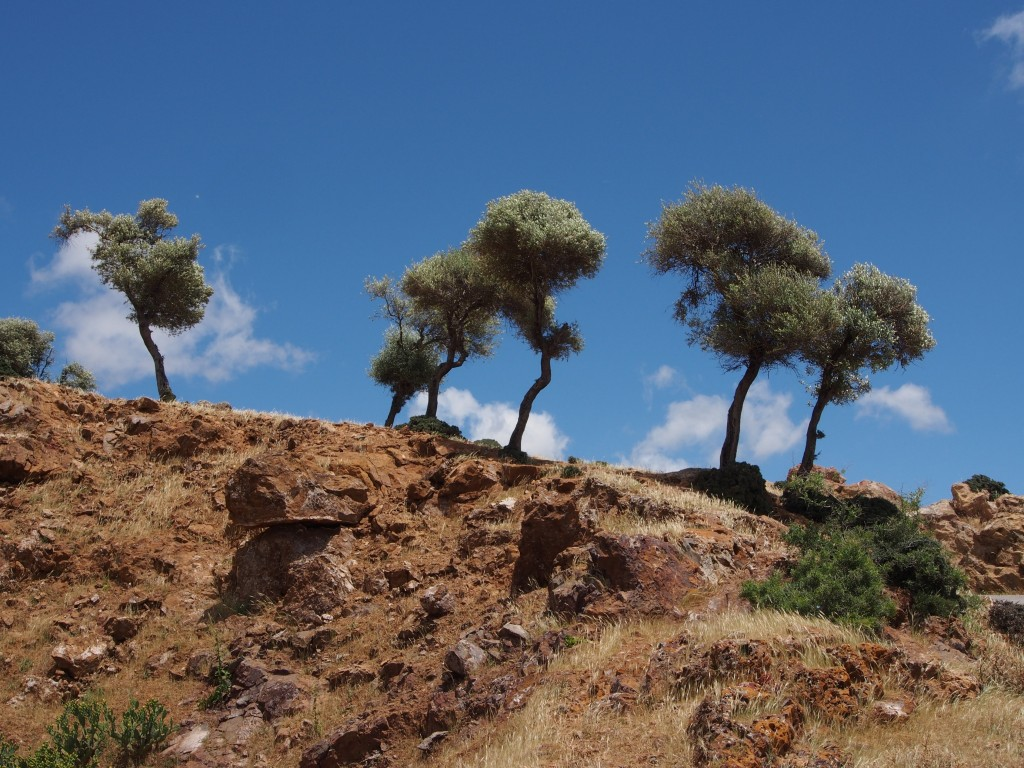 Paysages Tunisie